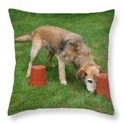 Dog Playing Throw Pillow