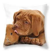 Dogue De Bordeaux Puppy With Red Guinea Throw Pillow