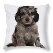 Doxie-doodle Puppy Throw Pillow