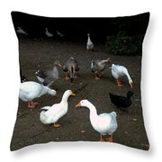 Duck Duck Goose Throw Pillow
