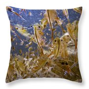 Eastern Fairy Shrimp Easterbrook Forest Throw Pillow