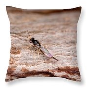 Emerald Ash Borer Parasite Throw Pillow by Science Source