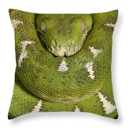 Emerald Tree Boa Corallus Caninus Throw Pillow by Pete Oxford