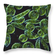 Euglena, Lm Throw Pillow