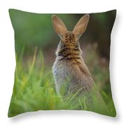 European Rabbit Oryctolagus Cuniculus Throw Pillow