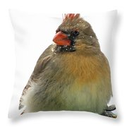 Female Cardinal In The Snow Throw Pillow