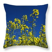 Field Of Rape In Bloom. Auvergne. France. Europe Throw Pillow
