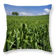 Field Of Wheat. Auvergne. France. Europe Throw Pillow
