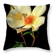 Five Petal Rose Throw Pillow