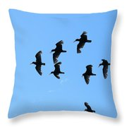 Flock Of Flying Oystercatchers Throw Pillow