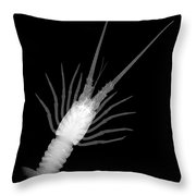 Florida Spiny Lobster X-ray Throw Pillow