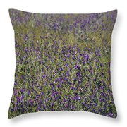 Flower Known As Salvation Jane Throw Pillow