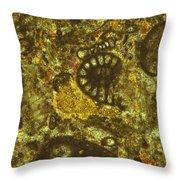Foraminiferous Limestone Lm Throw Pillow