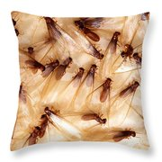 Formosan Termites Throw Pillow by Science Source