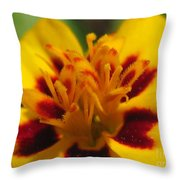 French Marigold Named Starfire Throw Pillow