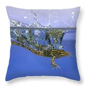 Frog Jumps Into Water Throw Pillow by Ted Kinsman