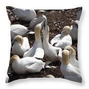 Gannet Birds Showing Fencing Behavior Throw Pillow