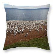 Gannet Colony Throw Pillow