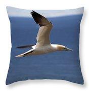 Gannet In Flight Throw Pillow