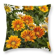 Gazania Gazania Rigens Flowers Throw Pillow
