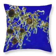 Germinating Fern Spores Throw Pillow