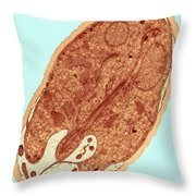 Giardia Sp. Protozoan Tem Throw Pillow