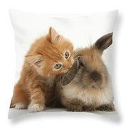 Ginger Kitten And Young Lionhead-lop Throw Pillow