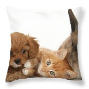 Ginger Kitten With Cavapoo Pup Throw Pillow