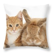 Ginger Kitten With Sandy Lionhead-cross Throw Pillow