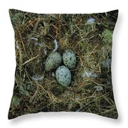 Glaucous-winged Gull Nest With Three Throw Pillow