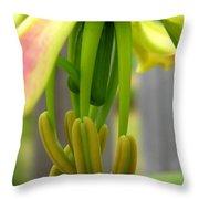 Gloriosa Named Rothschildiana Throw Pillow