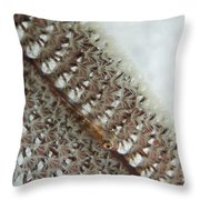 Goby On A Sea Pen, Indonesia Throw Pillow