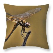 Golden Brown  Throw Pillow