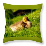 Gosling In Spring Throw Pillow