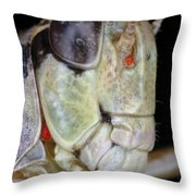 Grasshopper With Parasitic Mite Throw Pillow