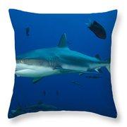Gray Reef Shark, Kimbe Bay, Papua New Throw Pillow