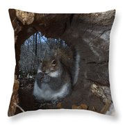 Gray Squirrel Throw Pillow by Ted Kinsman