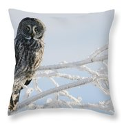 Great Grey Owl, Northern British Throw Pillow