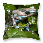 Green And Black Poison Frog Throw Pillow