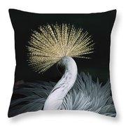 Grey Crowned Crane Balearica Regulorum Throw Pillow