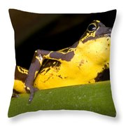 Harlequin Frog Throw Pillow