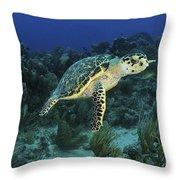 Hawksbill Turtle On Caribbean Reef Throw Pillow