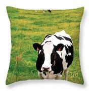 Holstein Dairy Cattle Throw Pillow