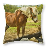 Horse Near Strone Wall In Field Spring Maine Throw Pillow