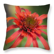 Hot Papaya Coneflower Squared Throw Pillow
