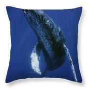 Humpback Whale Singer Maui Hawaii Throw Pillow