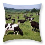 Ireland Friesian Cattle Throw Pillow