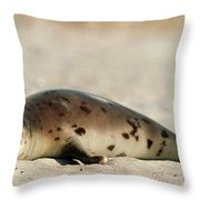 Juvenile Harp Seal Basking In The Sun Throw Pillow