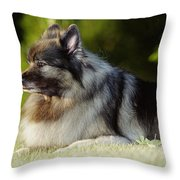 Keeshond Dog, Winnipeg, Manitoba Throw Pillow