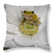Kermit Throw Pillow